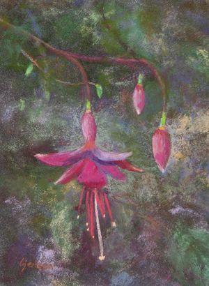 Darling Fuchsia
