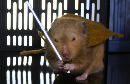 obi wan hamster from hamster wars by keith hopkin