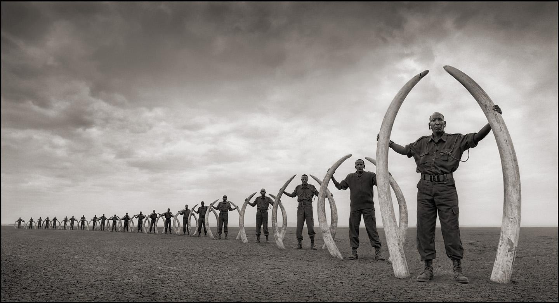 rangers holding elephant tusks