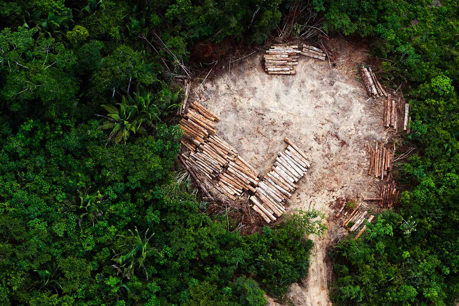 deforested amazon land
