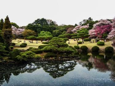 Turi Calafato, spring in tokyo