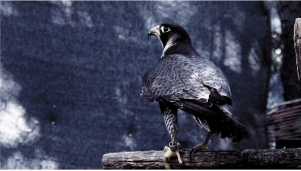Birdwatching - Blueforma