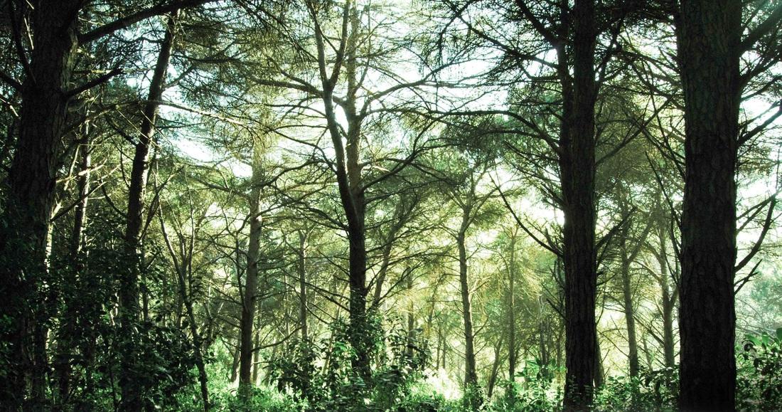 Parco foresta di Monsanto