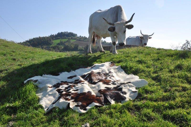 Stefano Scheda, Milk free # 1,c-print lambda su alluminio, cm 100x150, 2015