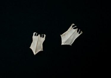 from DUNES, Bird+Bones Breast+Plate © Lux Eterna