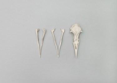 from DUNES, Bird+Bones, skulls © Lux Eterna