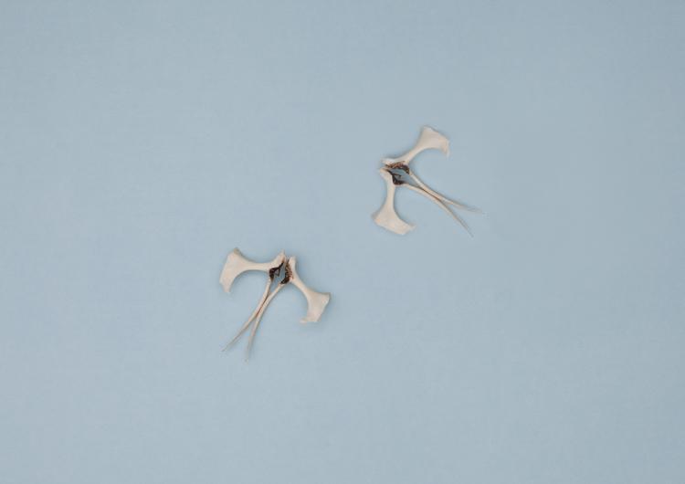 from DUNES, Bird+Bones, hips © Lux Eterna