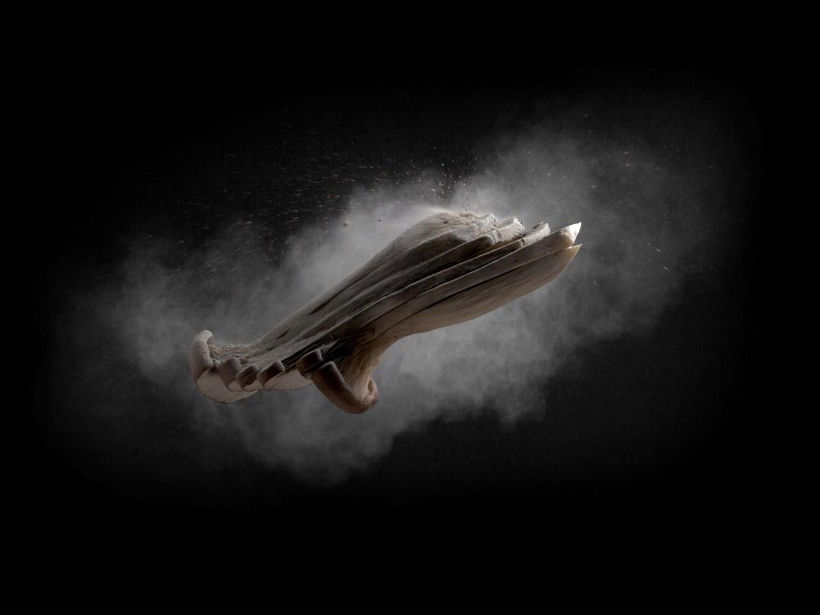 Mushrooms - Enrico Policardo