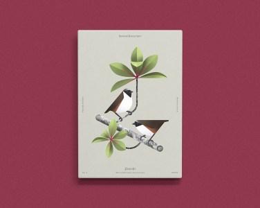 Beaauty of birds - Aga Więckowska