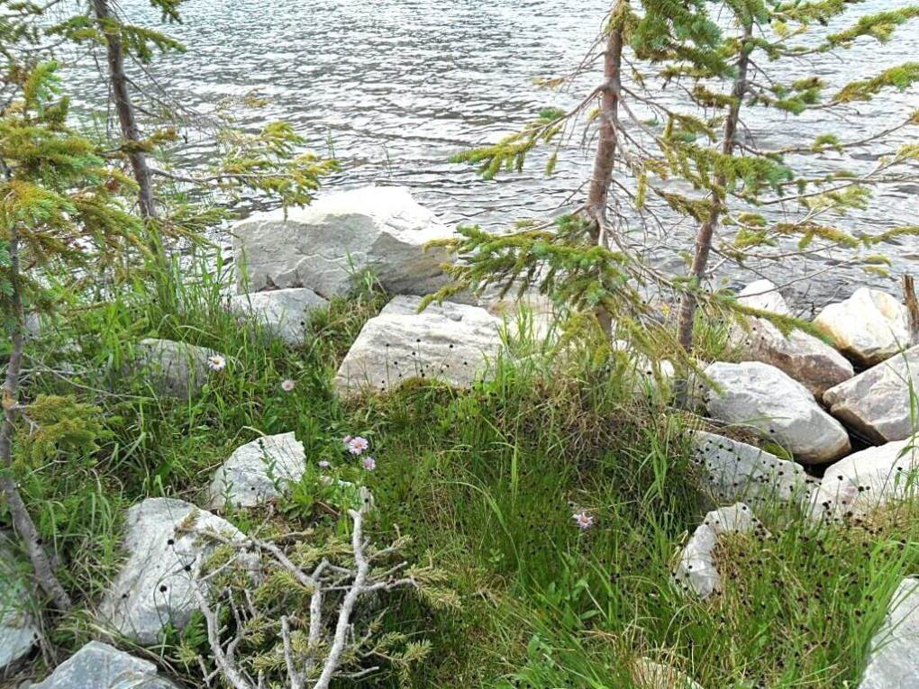 There are small pine trees and rocks on the edge and in the shallow water of a lake. This is a peaceful picture to go with our topic, the peace of God.