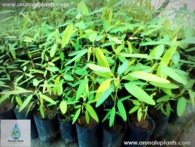 Pranajeewa Plant