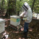 2020 May Bees #5