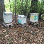 2020 May Bees #6