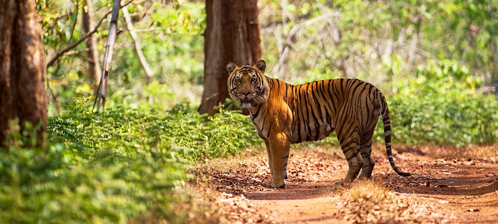 tiger-reserve-goa-tour-min