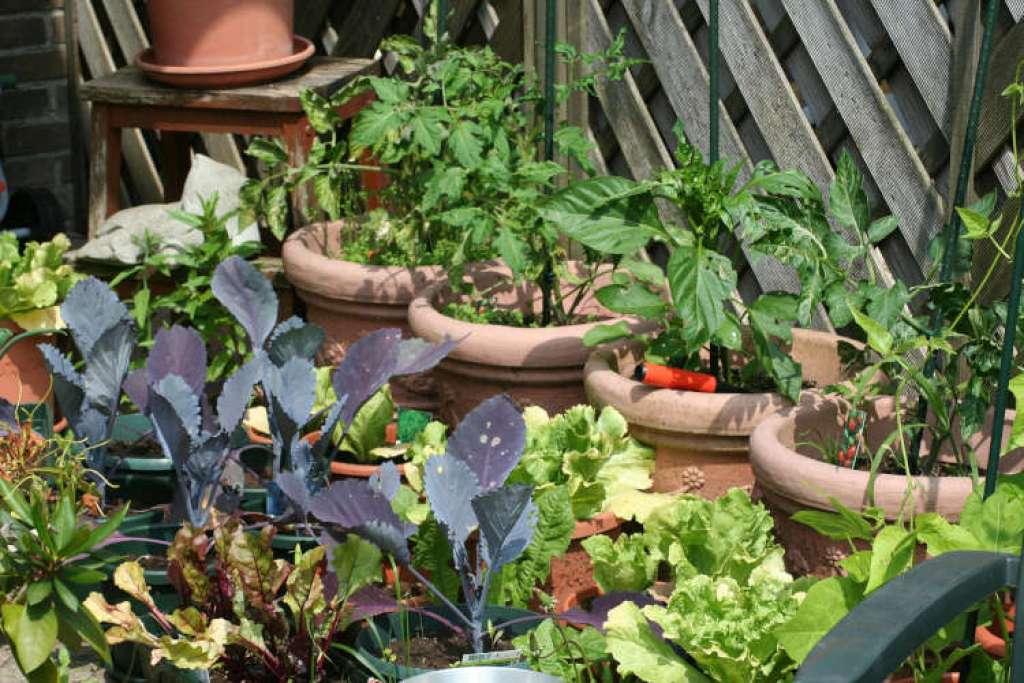 créer son potager bio sur sa terrasse