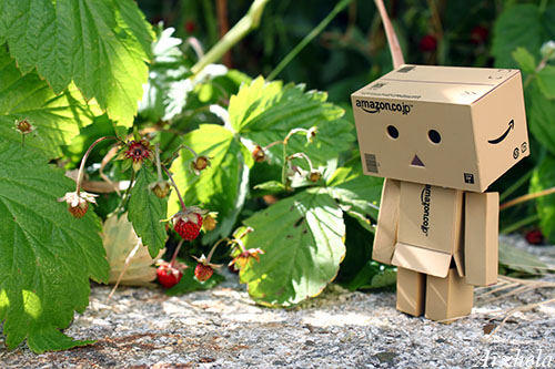 R0bb1 Danbo mini strawberry