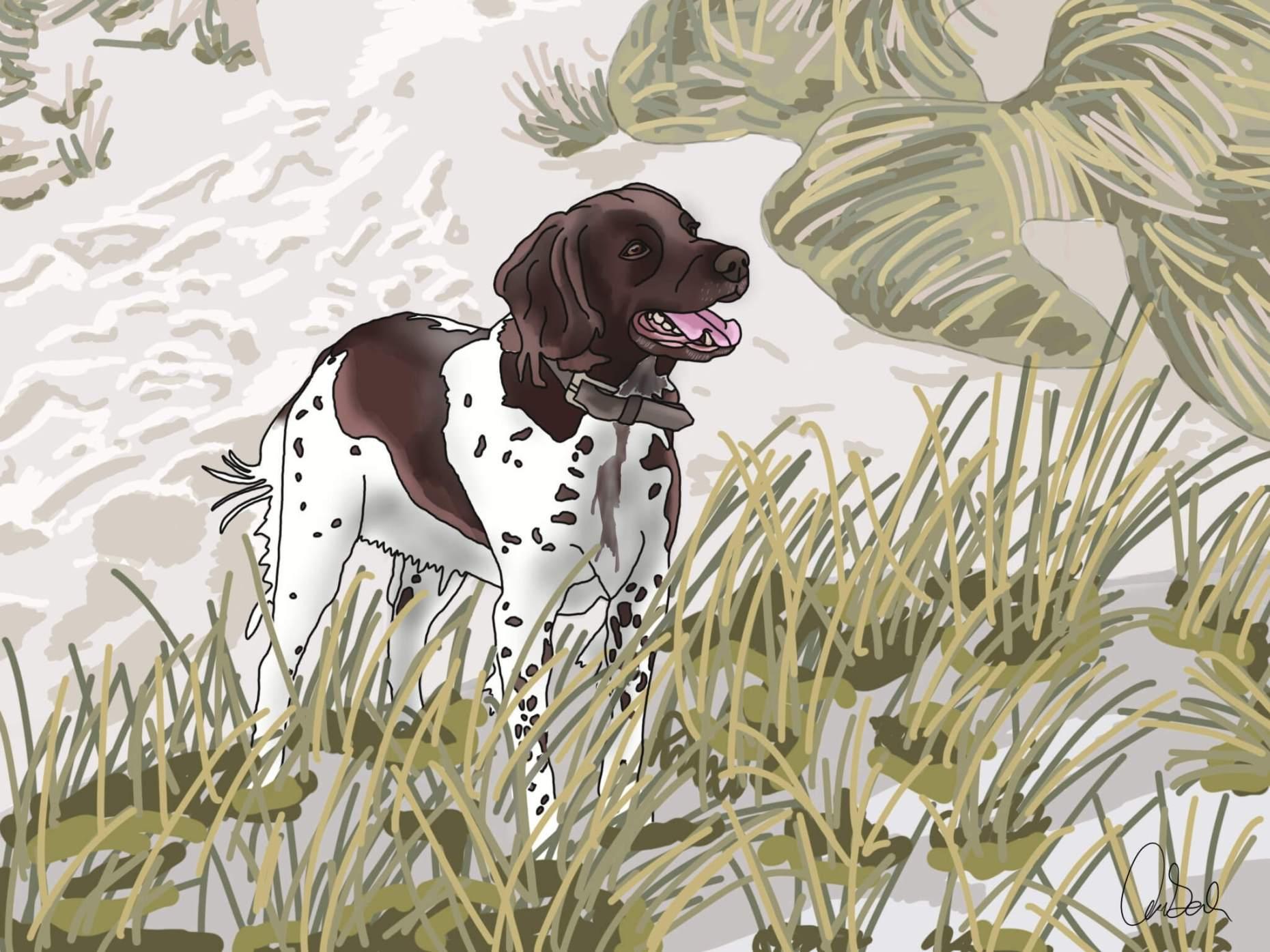 Photoshoot + Tegning af Hund