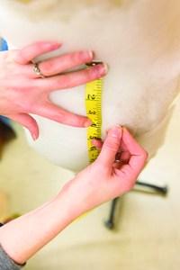 measuring on form  (image 3)