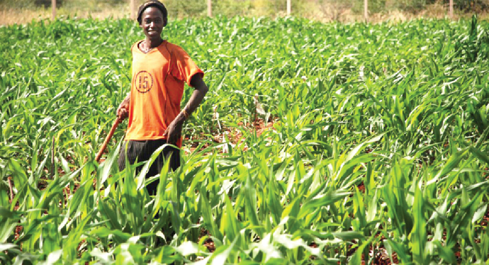 PERD encourages farmers to plant a wider range of crops