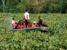 Water Hyacinth in Niger Delta Water Ways