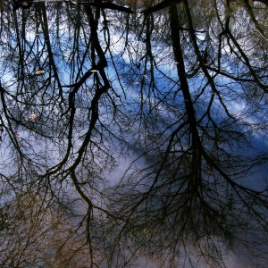 Reflection of trees in water (Some rights reserved by Dendroica cerulea)