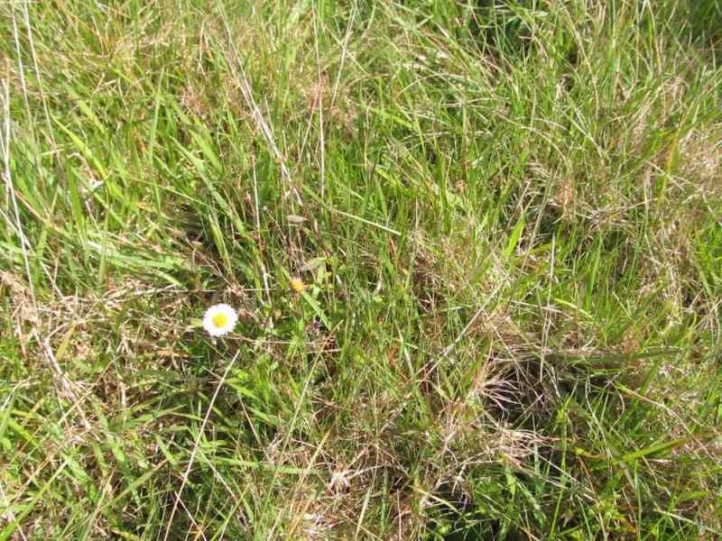 Tiny daisy flower
