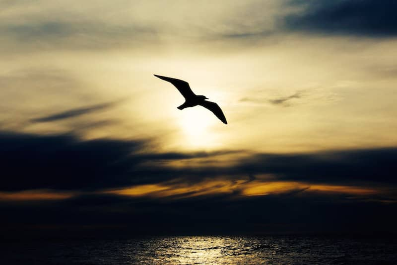 Seagull over the ocean