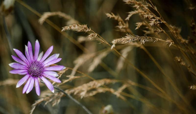 Flower: writing craft