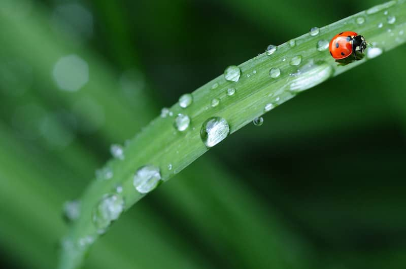 Gratitude for a ladybird