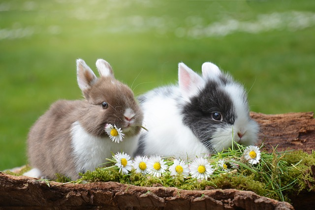 Bunnies eating daisies