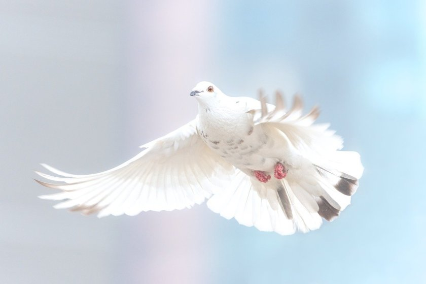 I am hope - see dove fly