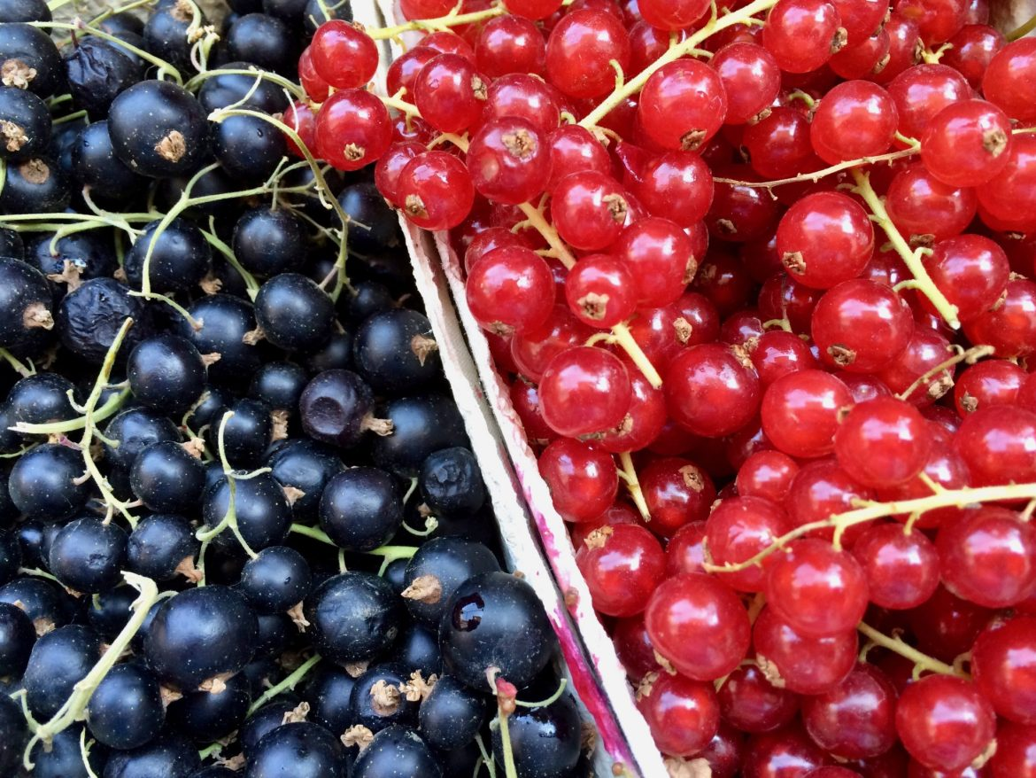 Close up of red- and blackcurrants in a punnet