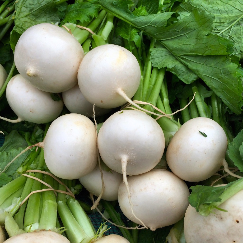 Round, white winter radishes
