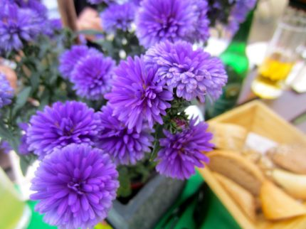 Purple flowers on a table