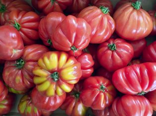 Fresh French tomatoes