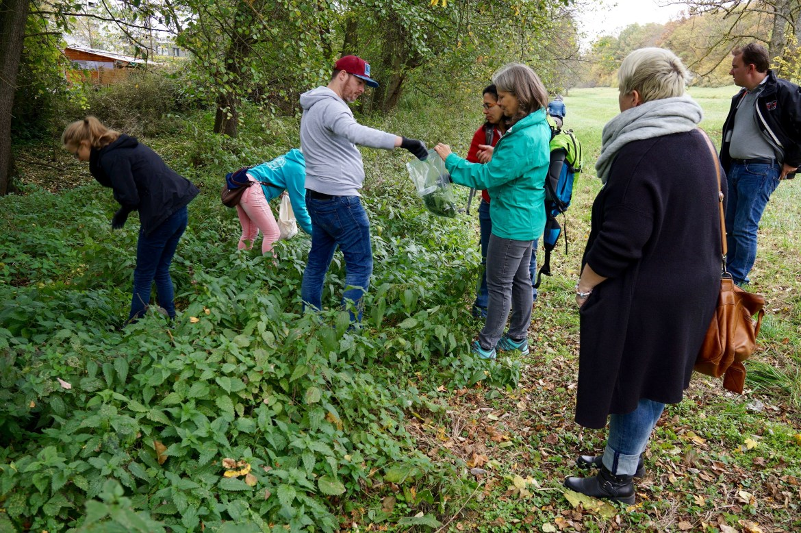 A group of bloggers collecting nettles in a park in Sindelfingen