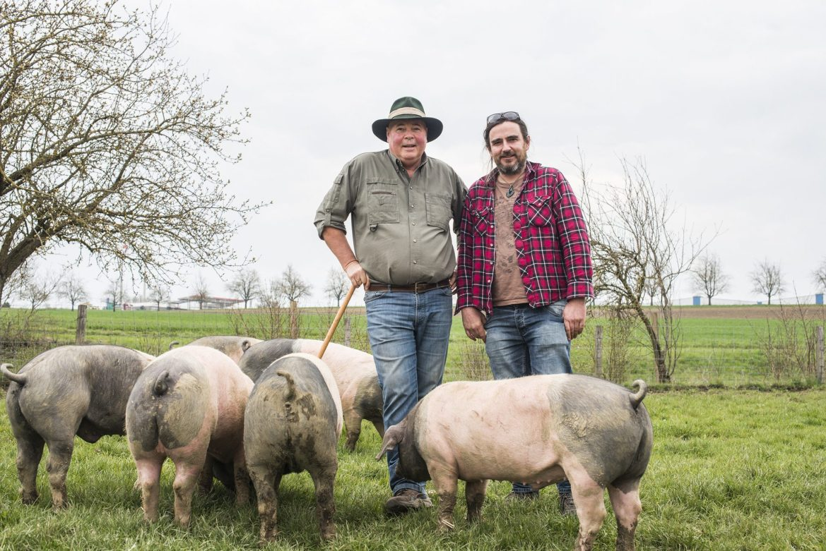 Two men surrounded by pigs in a field