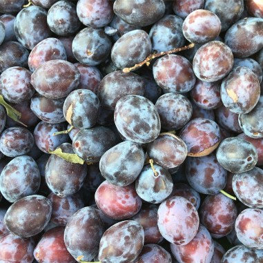 Close up of damsons from above