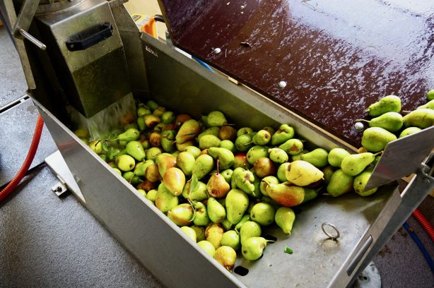Pears in a washing trough