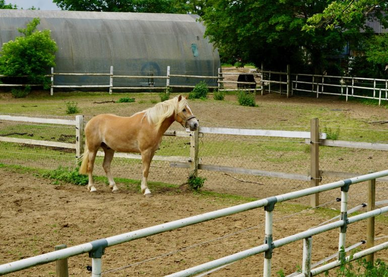 A horse in a field at Domäne Mechtildshausen