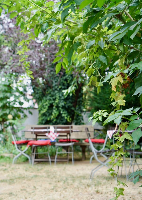 Leaves and a table behind with red cushions on the chairs