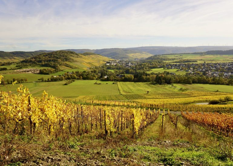 Golden vineyards in the Mosel