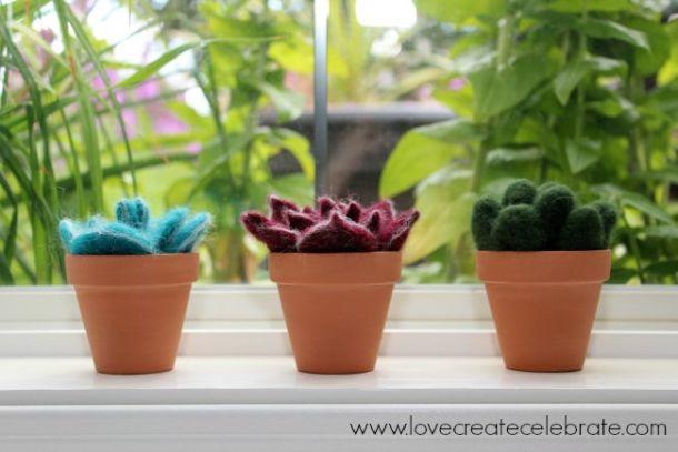 window-succulents