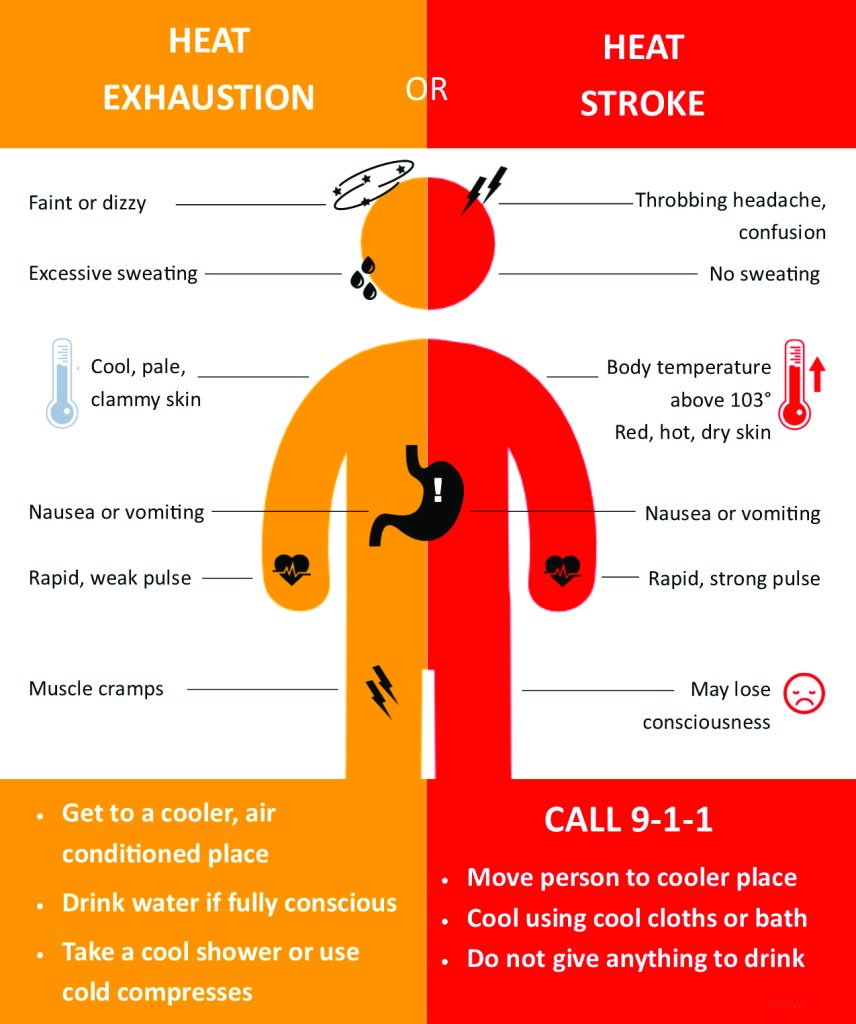 Surviving the Heat: Safely 1