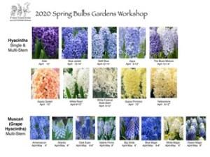 2020 Spring Bulb Gardens.002 - 2020 Spring Bulb Gardens.002