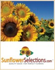 463 sunflowerselectionsad 240x300 - Find Suppliers