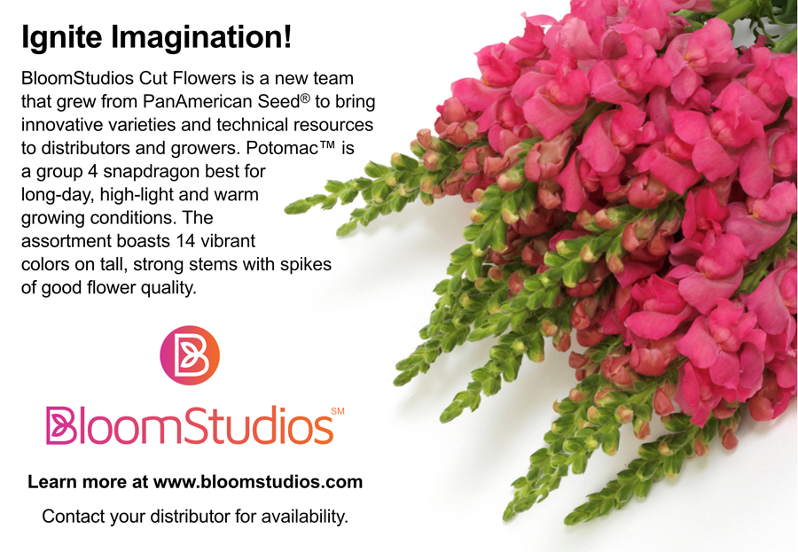 BloomStudios sponsor - Snapdragon Production in High Tunnels