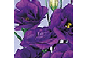 Echo series Lisianthus - 2002 Cut Flowers of the Year
