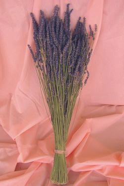 Lavandula Grosso - 2006 Cut Flowers of the Year