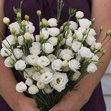 Lisianthus Doublini White - 2018 Cut Flowers of the Year